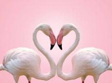 Какой тип любви вам нужен и вы можете выразить на основе вашей карты рождения?